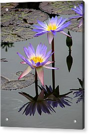 Lotus Reflection 4 Acrylic Print