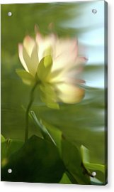 Lotus Reflection Acrylic Print