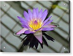 Lotus Acrylic Print by Vari Buendia