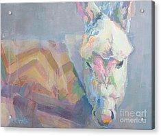 Louie Acrylic Print by Kimberly Santini