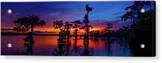 Louisiana Blue Salute Reprise Acrylic Print