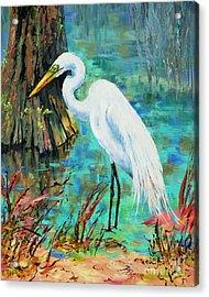 Louisiana Male Egret Acrylic Print