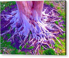 Louisiana Plantation Roots Acrylic Print by Angela Annas