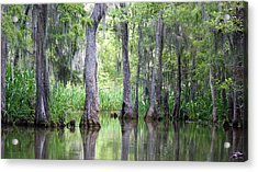 Louisiana Swamp 5 Acrylic Print by Inspirational Photo Creations Audrey Woods