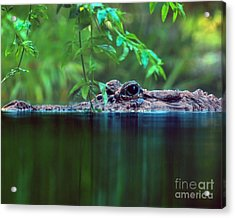 Acrylic Print featuring the photograph Louisiana Swimming Instructor  by Ken Frischkorn