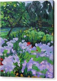 Louisiana Wild Phlox Acrylic Print by Barbara Jones