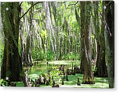 Louisiana Swamp Acrylic Print by Inspirational Photo Creations Audrey Woods