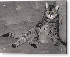 Lounge Cat Acrylic Print by Joy McKenzie