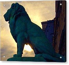 Louve Lion Acrylic Print by John Hansen