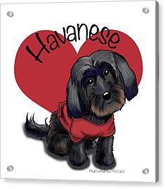 Lovable Black Havanese Acrylic Print