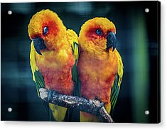 Acrylic Print featuring the photograph Love Birds by Chris Lord