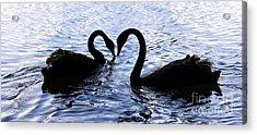 Love Birds On Swan Lake Acrylic Print by Jorgo Photography - Wall Art Gallery