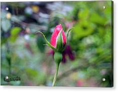 Love Blooming Acrylic Print