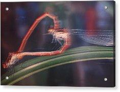 Love Bug Acrylic Print by Frankie Graham