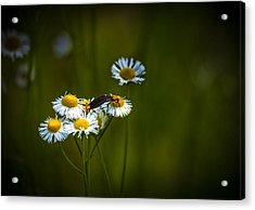 Love Bugs Acrylic Print by Marvin Spates