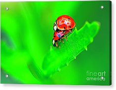 Acrylic Print featuring the photograph Love Bugs by Sharon Talson
