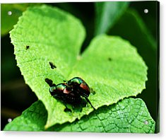Love Bugs Acrylic Print