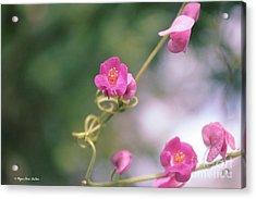 Acrylic Print featuring the photograph Love Chain by Megan Dirsa-DuBois