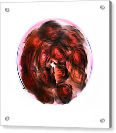 Love Grooves Acrylic Print
