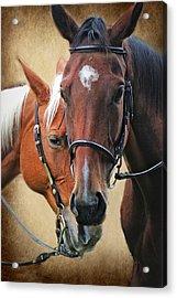 Love Horses Acrylic Print