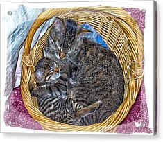 Love In A Hand  Basket  Acrylic Print by Constantine Gregory