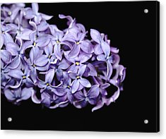 Love In Lilac Acrylic Print
