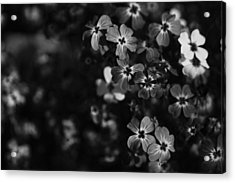 Love Lost Acrylic Print by Laurie Search