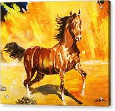 Lone Mustang Acrylic Print by Al Brown
