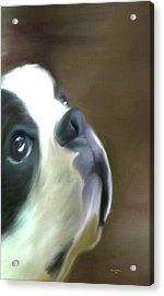 Acrylic Print featuring the painting Love Of A Boston by Maria Urso