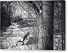 Love On A Tree Acrylic Print by CJ Schmit