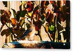 Love To See You Here Colorful Bird Acrylic Print by Nereida Slesarchik Cedeno Wilcoxon