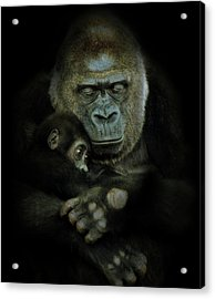 Loved Acrylic Print by Animus Photography