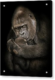 Loved Part Two Acrylic Print by Animus Photography