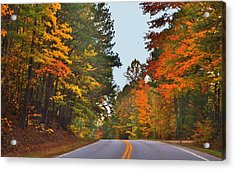 Lovely Autumn Trees Acrylic Print