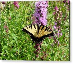 Lovely Butterfly Acrylic Print by Bonita Waitl