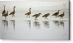 Lovely Day For A Stroll Acrylic Print