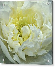 Acrylic Print featuring the photograph Lovely Peony by Sandy Keeton