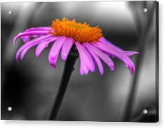 Acrylic Print featuring the photograph Lovely Purple And Orange Coneflower Echinacea by Shelley Neff