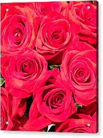 Lovely Roses Acrylic Print by Alohi Fujimoto