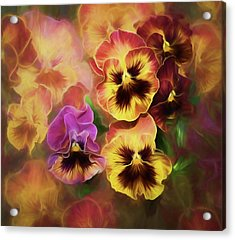 Acrylic Print featuring the photograph Lovely Spring Pansies by Diane Schuster
