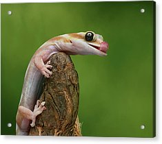 Acrylic Print featuring the photograph Lovely Water - Velvet Gecko by Nikolyn McDonald