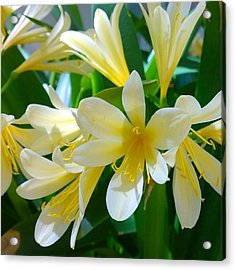 Lovely White And Yellow #flowers Acrylic Print