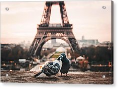 Lover Doves In Paris Acrylic Print