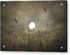 Lovers Moon Acrylic Print by Tom York Images