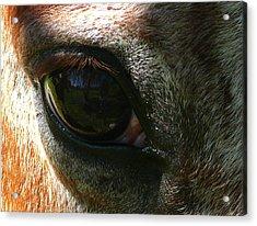 Loving Eye Acrylic Print