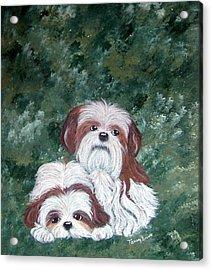 Loving Shih Tzu Acrylic Print by Tammy Brown