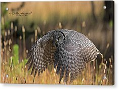 Low And Dangerous Acrylic Print