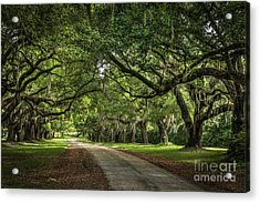 Low Country Live Oak Acrylic Print