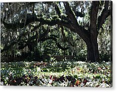 Acrylic Print featuring the photograph Low Country Series I by Suzanne Gaff
