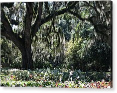 Acrylic Print featuring the photograph Low Country Series II by Suzanne Gaff